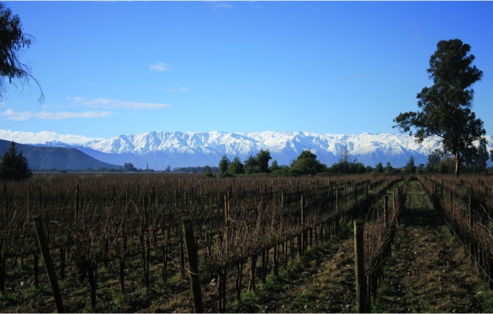 vineyard in winter Maipo Valley Wine Tours