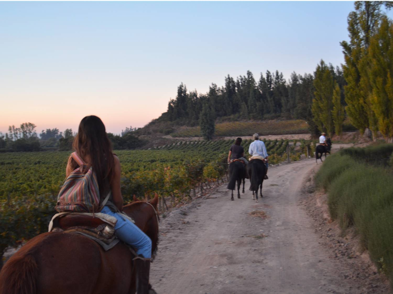 Maipo, a wine valley full of interesting contrasts